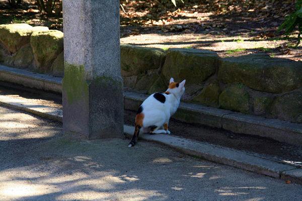 参道のネコ