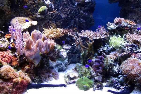 奄美のサンゴ礁